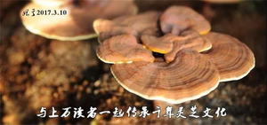 best Ganoderma Lucidum Powder- CGhealthfood.jpg